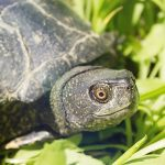 The Meaning of a Turtle Sighting