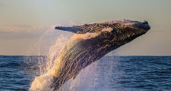 The Meaning of a Whale Sighting