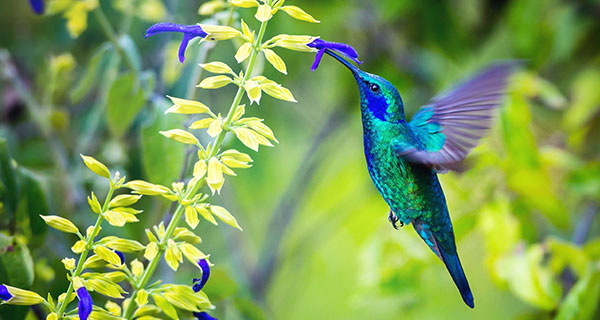 The Meaning of a Hummingbird Sighting