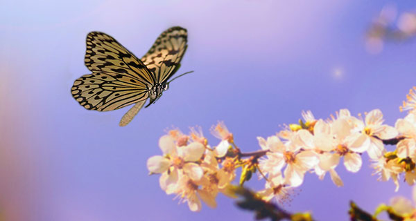The Meaning of a Butterfly Sighting