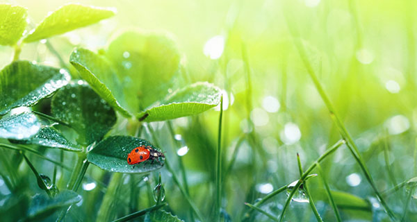 The Meaning of a Ladybug Sighting