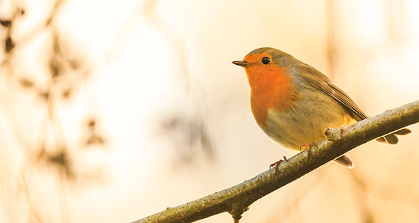 The Meaning of a Robin Sighting