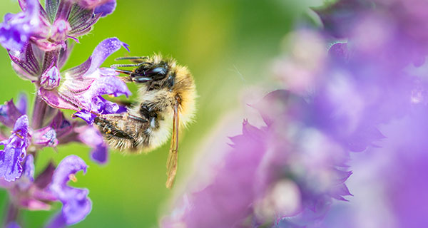 The Meaning of a Bee Sighting