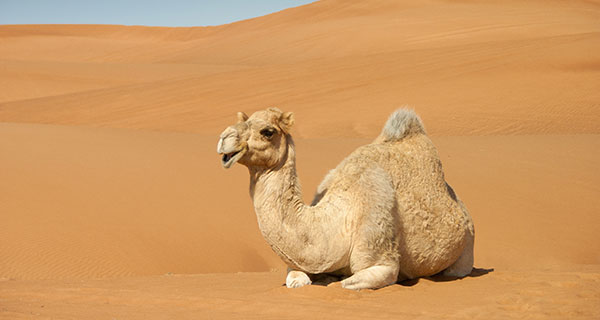 The Meaning of a Camel Sighting