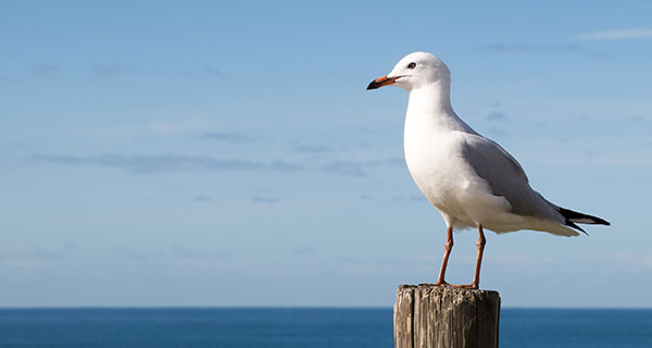 The Meaning of a Seagull Sighting