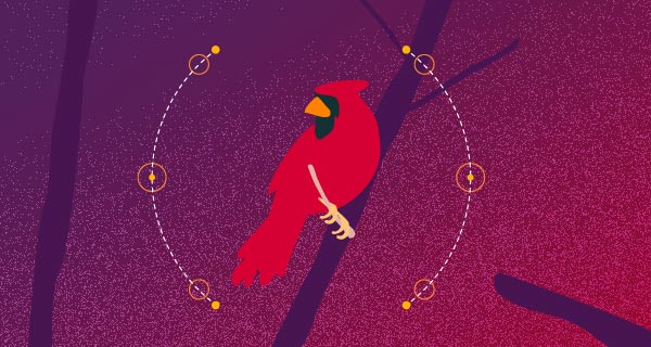Meaning of a Red Cardinal Sighting | California Psychics