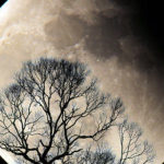 Your Total Lunar Eclipse Horoscope