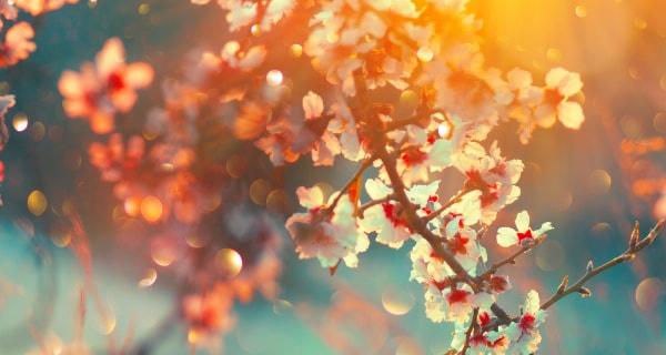 Spring Equinox | California Psychics