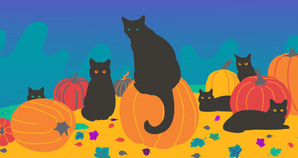 Black Cats: Fact and Fiction | California Psychics