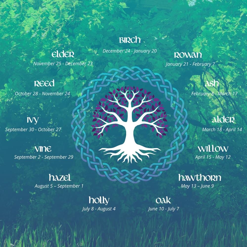 Celtic Tree Sign infographic | California Psychics